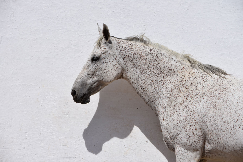 white-on-white-MYPNVET.jpg